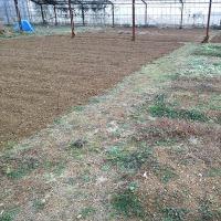 2017年1月22日 肥料を土と混ぜました