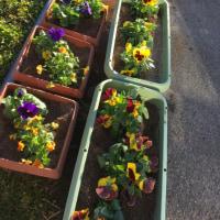 これも春のお楽しみ!