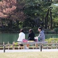 兼六園と名島桜
