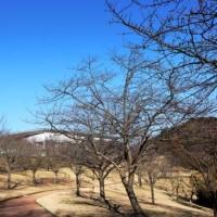 散歩道の風景・・・桜が咲いてる。