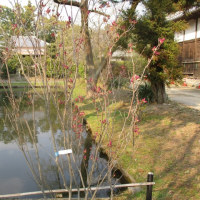 高田本山まで足を延ばして