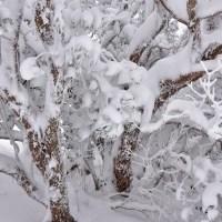 牧ノ戸峠の冬模様6・・・【いな】