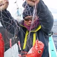 12月25日(日) 新島キンメ釣果