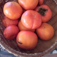 柿をもらった。