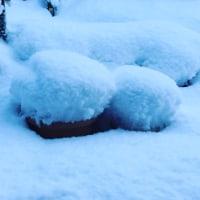 大雪です。降ったよ~~~