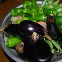 今日の収穫 ナス オクラ インゲン ニンジン 葉物