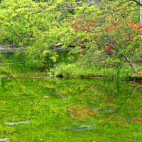 レンゲツツジ咲く池