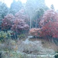 11月26日 初雪乱舞