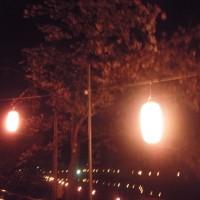 恒例の夜桜見物