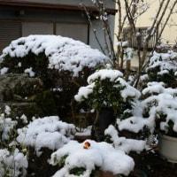 今となって雪が恋いしいです