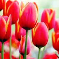 南国(指宿)からの花だより‥③ 【ひで某】