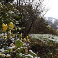 初雪と藁グツ