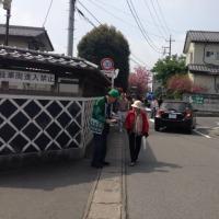 伝道活動報告(白井宿八重ざくら祭りでの伝道活動;平成28年4月24日)