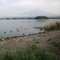河口湖、富士山、カモ?