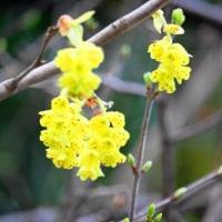 ミズキも咲いています・・・鹿児島の風景