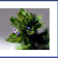 小さなちいさな可愛いお花
