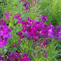 福岡市植物園のお花ばたけ