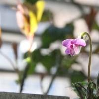 シャンティーの状態とお花たち