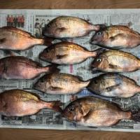 美浜フィッシングパーク 春の真鯛釣り III