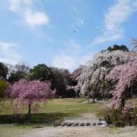 4月『水曜日』の会(2)