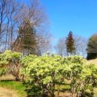 彩の国嵐山町・・・「蝶の里公園」の散歩・・・早春の蝶コツバメと・・・アセビの花と