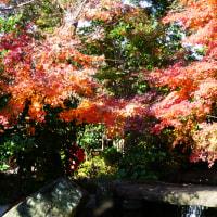『旧吉田邸』 紅葉狩り(2)