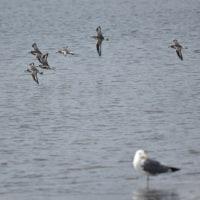 探鳥週間イベント(10/29・30)が近づいてきました。