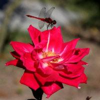 秋のバラ祭典・可児市の「花フェスタ記念公園」へ