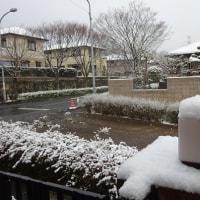 初雪が・・・