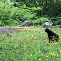 黒猫の庭~クレマチス~