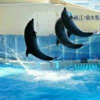 新江ノ島水族館お出かけ!「肩こり、頭痛、自律神経乱れ立川ヒロ整骨院」