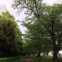 新緑の綺麗な季節