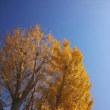 秋? 冬?