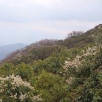 伊豆山稜線歩き