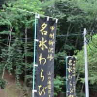 2016/07/29@散歩コースで大きな発見