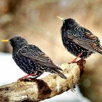 美しさでは、負けません!ファンの多い鳥です。