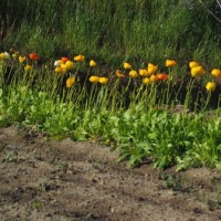 「鹿ヶ谷南瓜」を蒔種、「ひとくちメロン」苗の移植