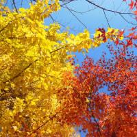 日比谷公園の紅葉っす。