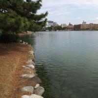 水と緑のオアシス 大濠公園(中之島) 6