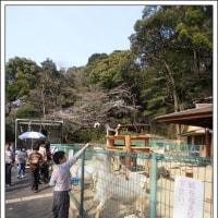 がんばる 動物園