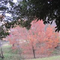 いろいろな・紅 (黄)葉