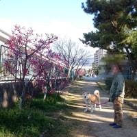 ジャパンペットフェアに行きました(^^)