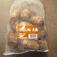 里芋&自然薯植え付け