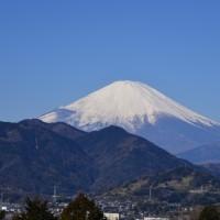 松田桜まつり~神奈川県松田町①