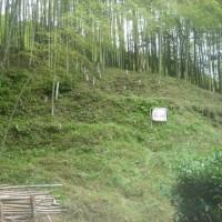 竹林整備&ひまわり畑の雑草取り