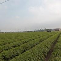 蕎麦の畑を見に行って来ました。