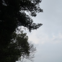 本屋親父のつぶやき 5月24日緑に囲まれた春日神社境内