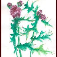 アザミの花はきれいなのですがー葉っぱの棘がいたい