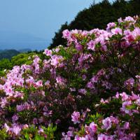 長崎県、名串山のつつじp6ラスト(シグマDP2メリル)