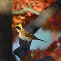 武蔵五日市周辺と武蔵野公園
